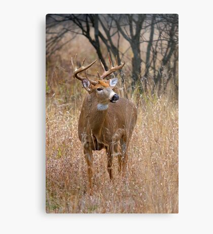 Blood Antlers - White tailed deer Buck Metal Print