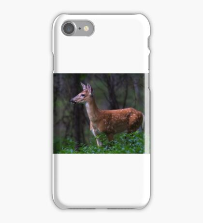 Portrait of a Fawn - White Tailed Deer iPhone Case/Skin