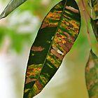 Colours of Oz by Karen E Camilleri
