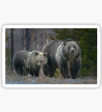 Grizzly Bear Sow And Cub-#3317 Sticker