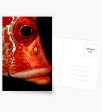 Giant squirrelfish Postcards
