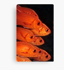 white-edged soldierfish Canvas Print