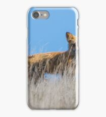 Red Fox Hunting Rabbits iPhone Case/Skin