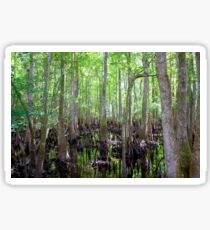 Cypress Swamp Sticker