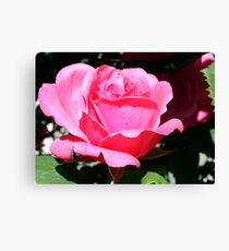Village Rose Canvas Print