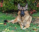 Chance in Autumn by Sandy Keeton