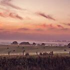Pokolbin NSW Australia by Allport Photography