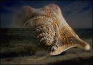 I Can Hear the Sea by Nigel Bangert