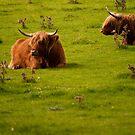 Highland cow by liza1880