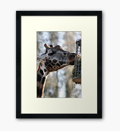 Whose idea was this? Framed Print