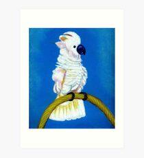 Moluccan Cockatoo Art Print