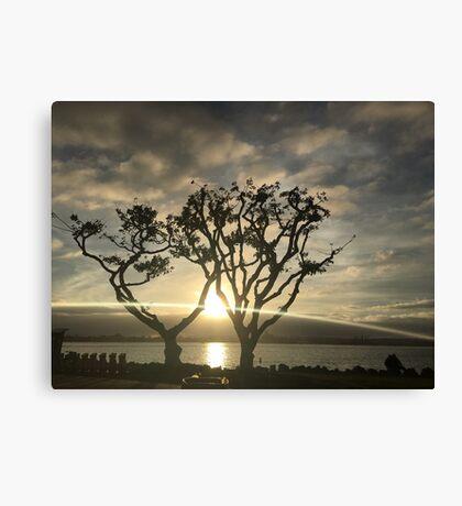 Corel Trees Canvas Print