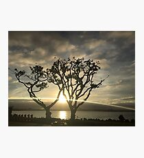 Corel Trees Photographic Print