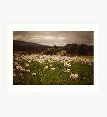 Opium Poppies Art Print