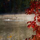 Scrambling Ducks by Jim Haley