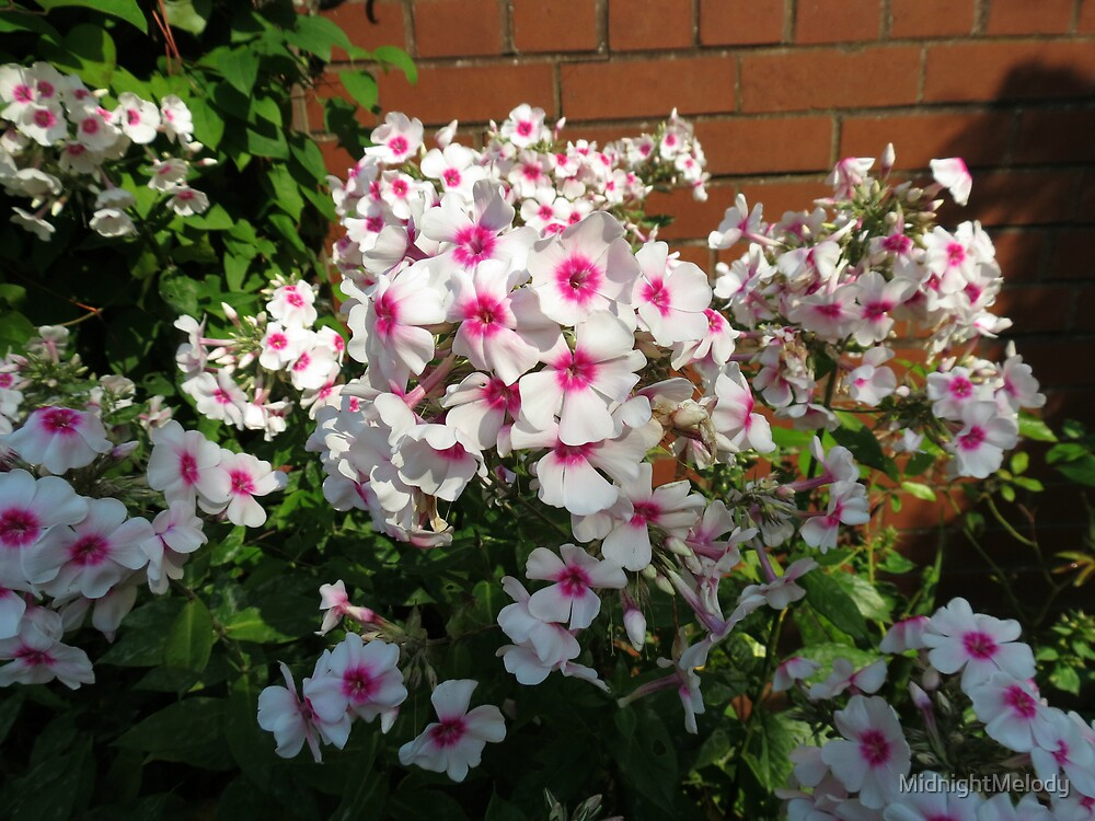 Sunlit Pink and White Blossoms by MidnightMelody
