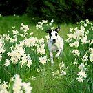 my dog by meredith  langmaid
