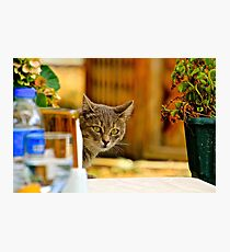 Lunch Companion Photographic Print