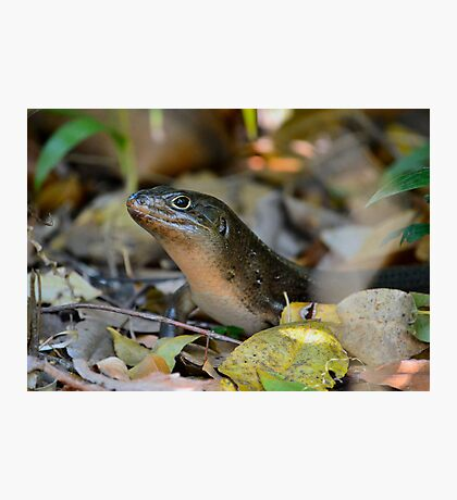 Land Mullet 1 Photographic Print