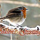 Robin's Greeting by JEZ22