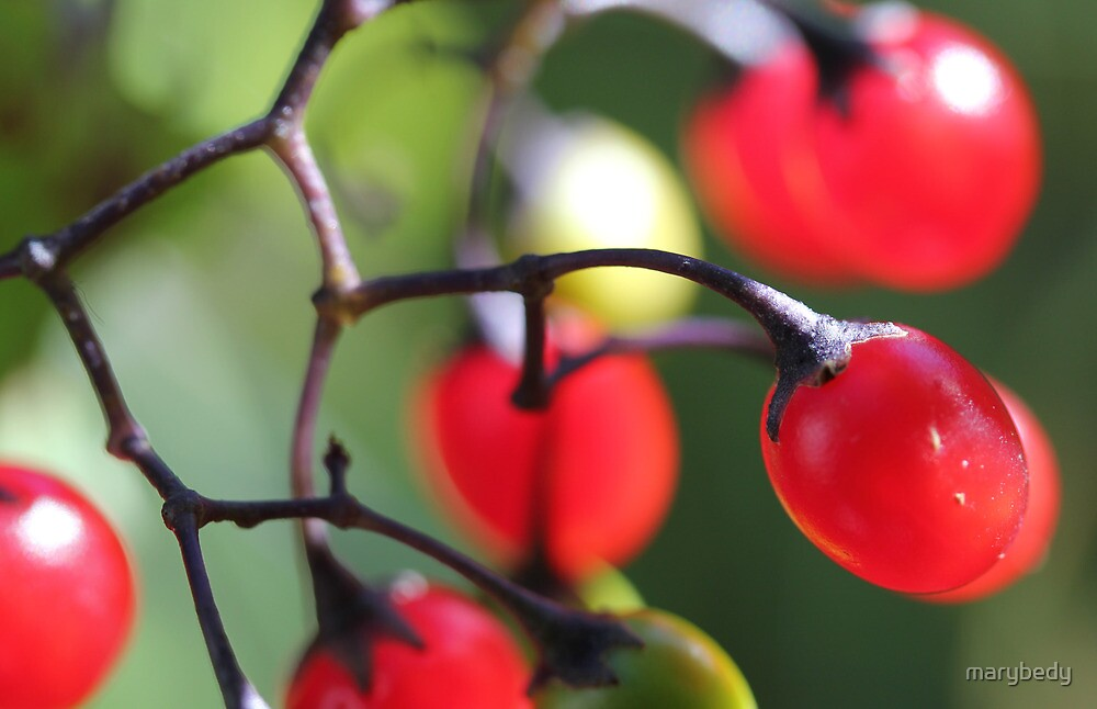Berries 2 by marybedy