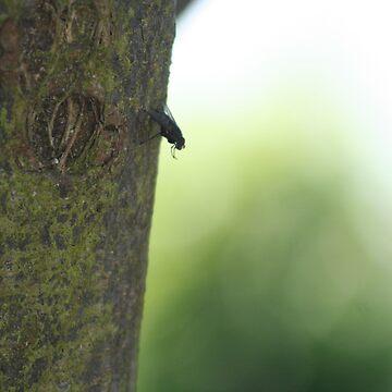 Fly on a Tree by DaniJames
