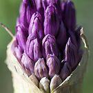 Flora III by jude walton