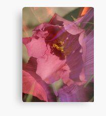 Camellia sasanqua 'Pink Butterfly' Metal Print