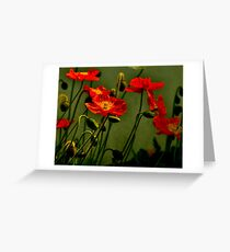 Red Poppy Greeting Card
