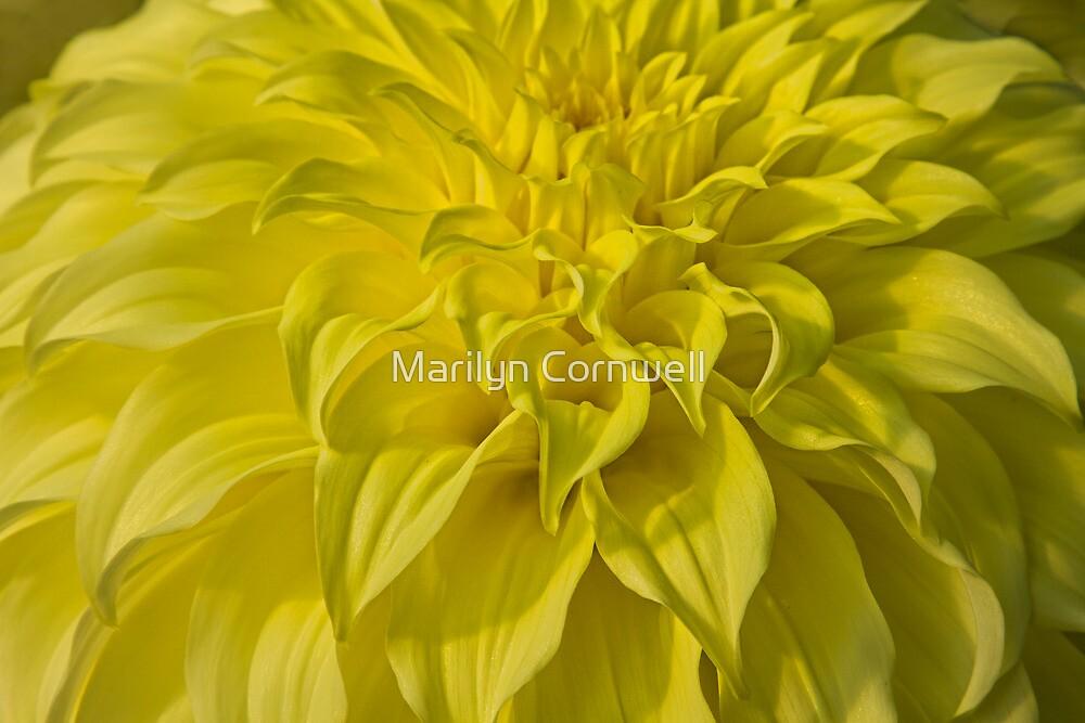 Solar Flare by Marilyn Cornwell