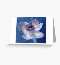 Magnolia Weissneri Greeting Card