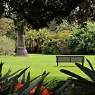 The Bench by brendanscully