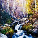 Autumn by Jeffrey  Sinnock
