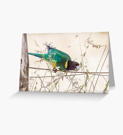 Australian Ringneck Parrot Greeting Card