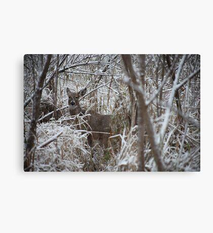 First Snow Doe Canvas Print