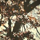 Spring daze... by Colleen Milburn