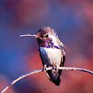 HummingbirdXI by loiteke