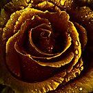 Golden Teardrops .... by Sharon House