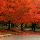 Autumn  by Tim Wright