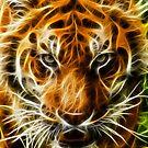 Tiger by srhayward