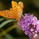 Butterfly by liza1880