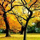 Autumn © by Dawn Becker