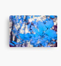 Metamorphose Canvas Print