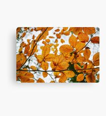 Naturally  Canvas Print