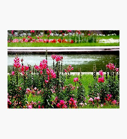 Summer park Photographic Print