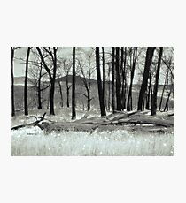 Fire Blackened Beech Trees  (duotone) Photographic Print