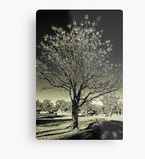 Outback Mulga tree  (duotone) Metal Print