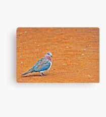 a coloured dove Canvas Print
