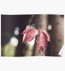 Woodland Red Poster