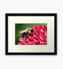 Bumblebee 1 Framed Print